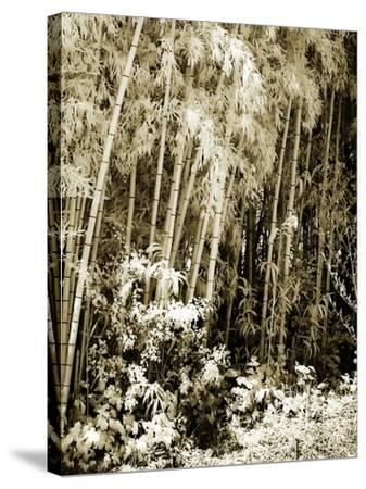 Bamboo Grove I-Alan Hausenflock-Stretched Canvas Print