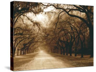 Savannah Oaks I-Alan Hausenflock-Stretched Canvas Print