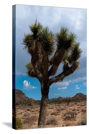 Joshua Tree II-Erin Berzel-Stretched Canvas Print