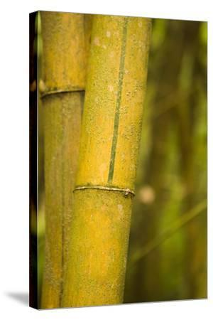 Bamboo I-Karyn Millet-Stretched Canvas Print