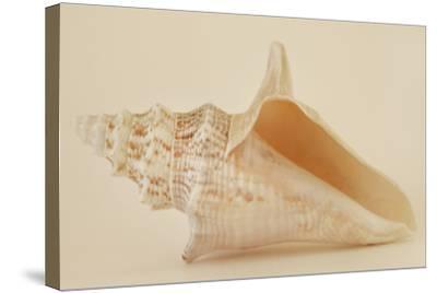Ocean Treasures IX-Karyn Millet-Stretched Canvas Print