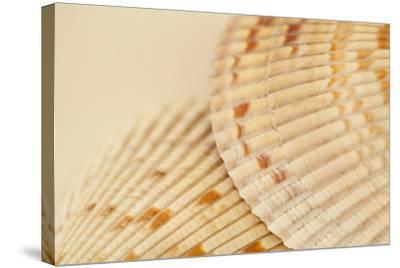 Ocean Treasures XIII-Karyn Millet-Stretched Canvas Print