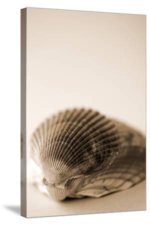Shell Symmetry I-Karyn Millet-Stretched Canvas Print