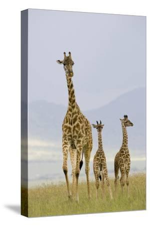 Savannah Strut-Susann Parker-Stretched Canvas Print
