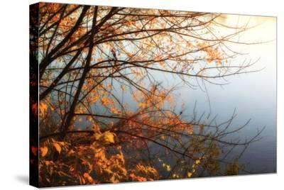 Leaves of Orange I-Alan Hausenflock-Stretched Canvas Print