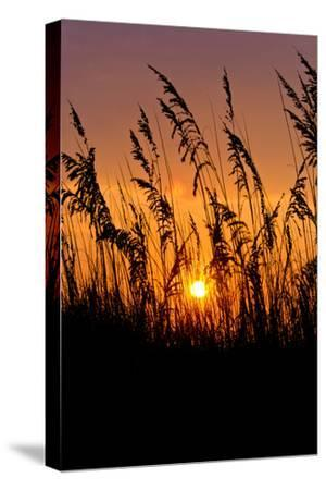 Sea Grass Silhouetted At Sunrise-Brian Gordon Green-Stretched Canvas Print