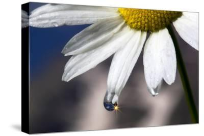A Sparkle in a Drop of Water on a Daisy Petal-Robbie George-Stretched Canvas Print