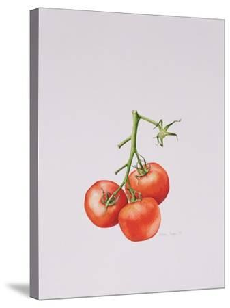 Three Tomatoes on the Vine, 1997-Alison Cooper-Stretched Canvas Print