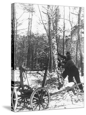A Couple Cutting Down a Tree for Firewood, 21st February 1947-German photographer-Stretched Canvas Print