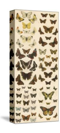 Our British Butterflies-English School-Stretched Canvas Print