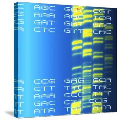 DNA Autoradiogram And Codons-Mehau Kulyk-Stretched Canvas Print