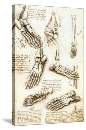 Foot Anatomy by Leonardo Da Vinci-Sheila Terry-Stretched Canvas Print