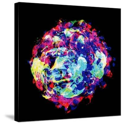 Embryo, Light Micrograph-Dr. Gopal Murti-Stretched Canvas Print