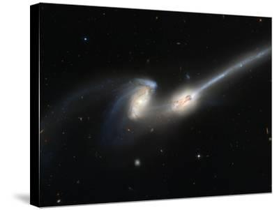 Mice Colliding Galaxies--Stretched Canvas Print