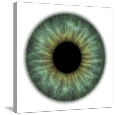 Eye-PASIEKA-Stretched Canvas Print