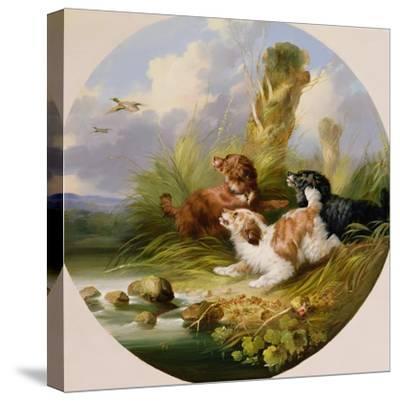 Three Spaniels Flushing Mallard-George Armfield-Stretched Canvas Print