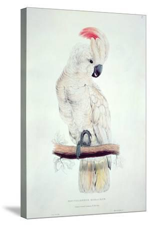 Salmon-Crested Cockatoo-Edward Lear-Stretched Canvas Print