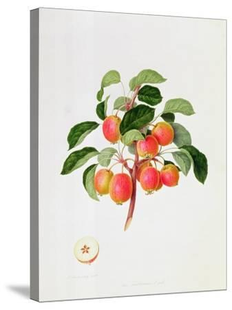 The Tartarian Crab Apple, 1819-William Hooker-Stretched Canvas Print