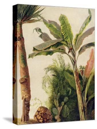 Banana Tree, C.1865-Frederic Edwin Church-Stretched Canvas Print