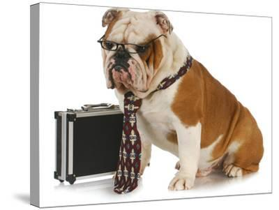 Business Dog - English Bulldog Male Wearing Tie And Glasses Sitting Beside Briefcase-Willee Cole-Stretched Canvas Print