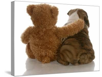 Best Friends - English Bulldog Puppy Sitting Beside Bear-Willee Cole-Stretched Canvas Print