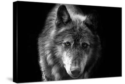Wolf-Brian Dunne-Stretched Canvas Print