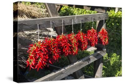 Red Hungarian Hot Chili Locally known as Paprika, Kalocsa, Hungary-Martin Zwick-Stretched Canvas Print