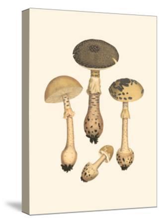 Curtis Mushrooms II-Samuel Curtis-Stretched Canvas Print