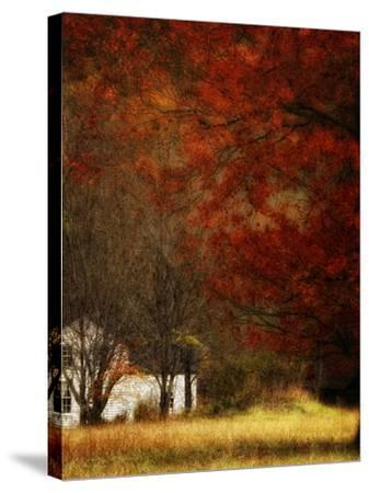 Beyond October's Maple-Danny Head-Stretched Canvas Print