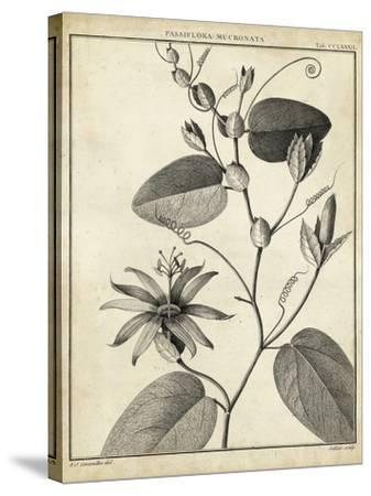 Passiflora VI-Charles Francois Sellier-Stretched Canvas Print