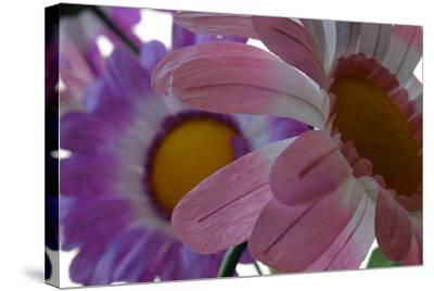 A Close Up View of Two Silk Flowers-Paul Damien-Stretched Canvas Print