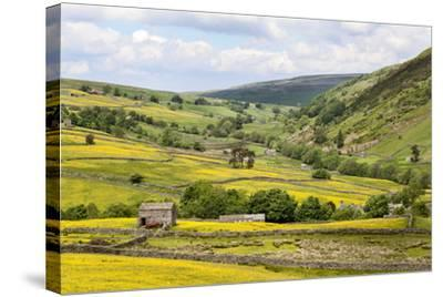 Summer Buttercups in Upper Swaledale Near Thwaite-Mark Sunderland-Stretched Canvas Print