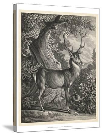 Woodland Deer I-Ridinger-Stretched Canvas Print