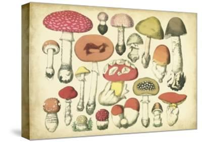 Vintage Mushroom Chart-Vision Studio-Stretched Canvas Print