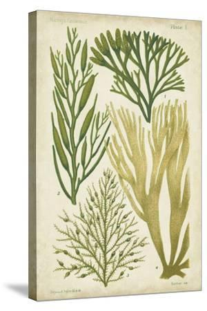 Seaweed Specimen in Green III-Vision Studio-Stretched Canvas Print