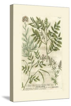 Garden Varietals II-Johann Wilhelm Weinmann-Stretched Canvas Print