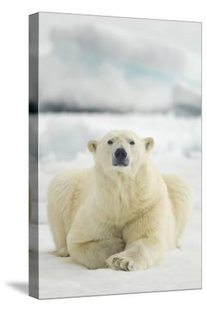 Polar Bear, Svalbard, Norway--Stretched Canvas Print