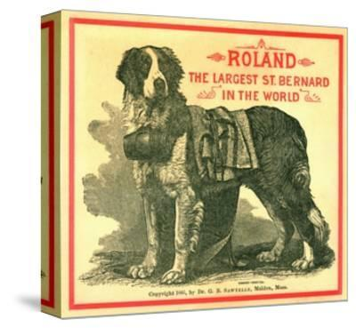 Roland the Largest St. Bernard in the World Trade Card--Stretched Canvas Print