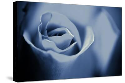 Blue Rose II-Beth Wold-Stretched Canvas Print