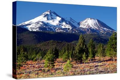 Morning in Shasta-Douglas Taylor-Stretched Canvas Print