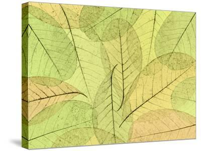 Leaf Collage I-Kathy Mahan-Stretched Canvas Print