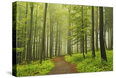 Morning Fog in Forest Near Bad Marienberg, Westerwald, Rhineland-Palatinate, Germany, Europe-Jochen Schlenker-Stretched Canvas Print
