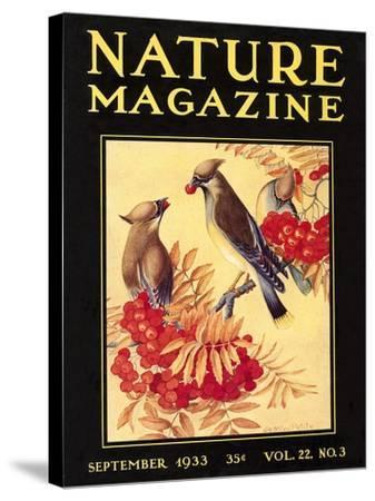 Nature Magazine Cover, Birds--Stretched Canvas Print