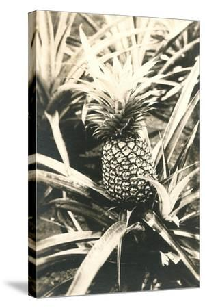 Pineapple on Plant--Stretched Canvas Print