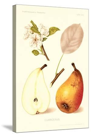 Clairgeaus Pears--Stretched Canvas Print