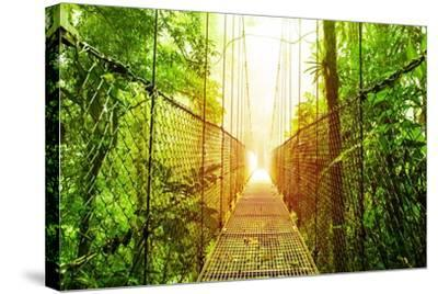 Picture of Arenal Hanging Bridges Ecological Reserve, Natural Rainforest Park-Anna Omelchenko-Stretched Canvas Print