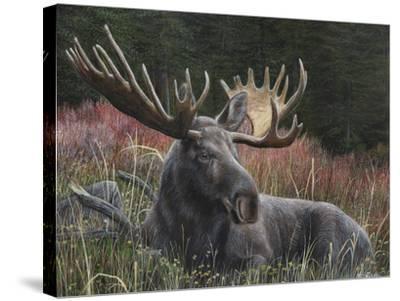 Recumbent Moose-Kevin Daniel-Stretched Canvas Print