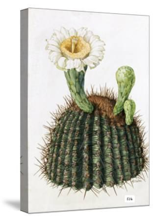 A Painting of a Saguaro Cactus and its Blossom-Mary E. Eaton-Stretched Canvas Print