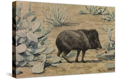 A Painting of a Collared Peccary, also known as a Muskhog, Eating-Louis Agassi Fuertes-Stretched Canvas Print