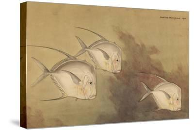 A Painting of Moon Fish-Hashime Murayama-Stretched Canvas Print